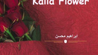 Photo of Kalla Flower