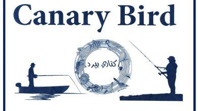 Photo of Canary Bird